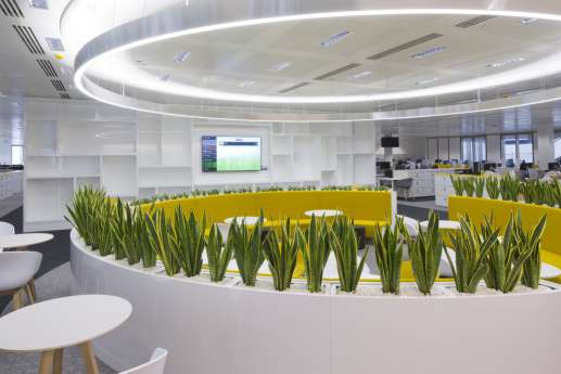Indoor plants in a modern office interior