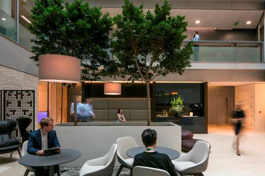 Indoor trees and staff working in spacious London office fit out