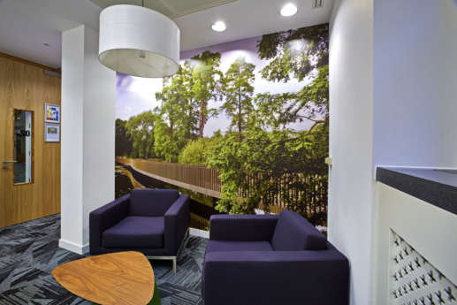 Wall graphic showing trees and wooden walkway in modern office