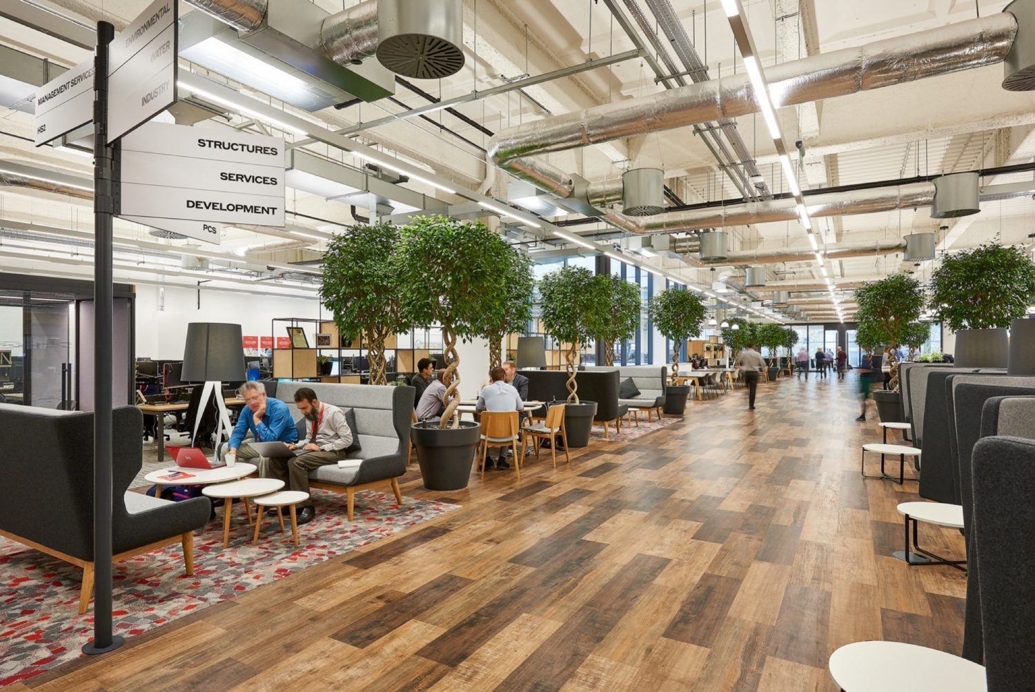 WSP office fit out with indoor trees